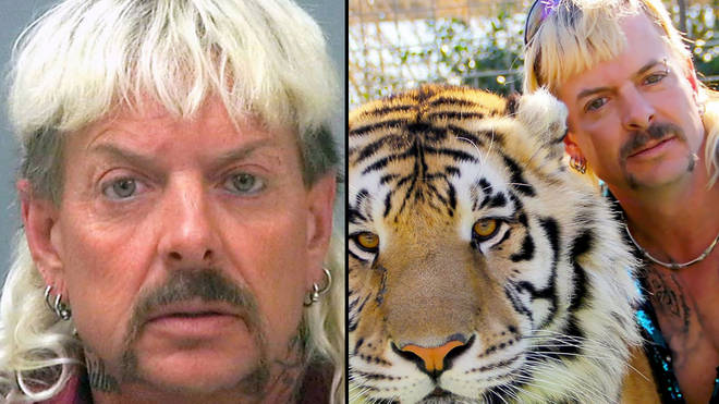 Joe Exotic kept over 1,200 big cats in his backyard zoo.