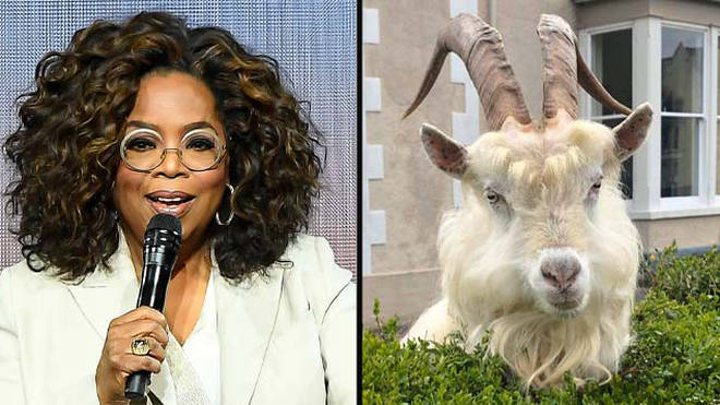 Oprah Winfrey donated $10million to coronavirus relief efforts and goats took over Wales.