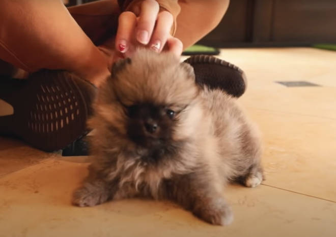 Jeffree Star's new puppy Dominatrix