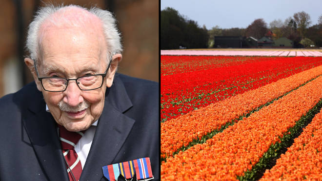 Captain Tom Moore raised £18million for the NHS, and Keukenhof flower garden is giving out virtual tours.