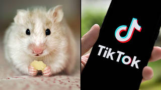 TikTok Hamster Cult explained: What does it mean?