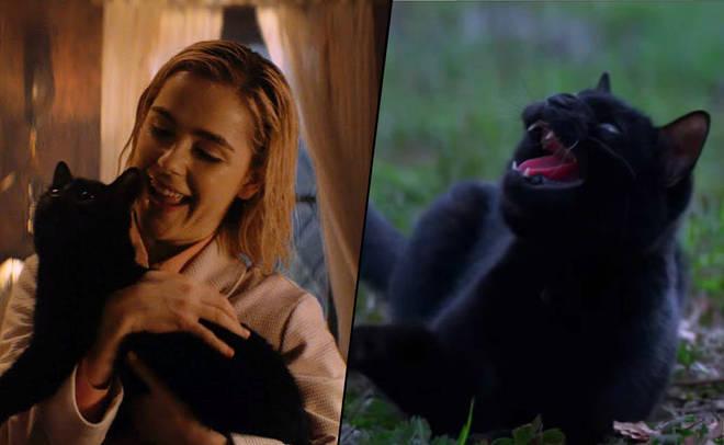 Sabrina holding Salem on 'Chilling Adventures of Sabrina'