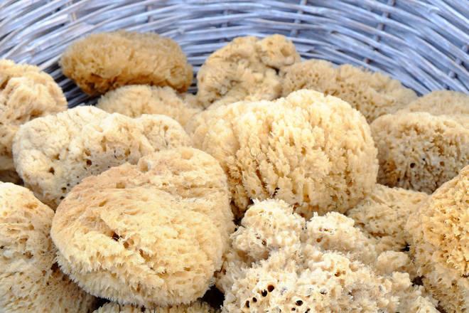 Sea Sponges.