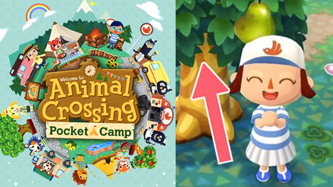 Animal Crossing Pocket Camp: Cheats, Tips, Secrets and Everything You Need To Know