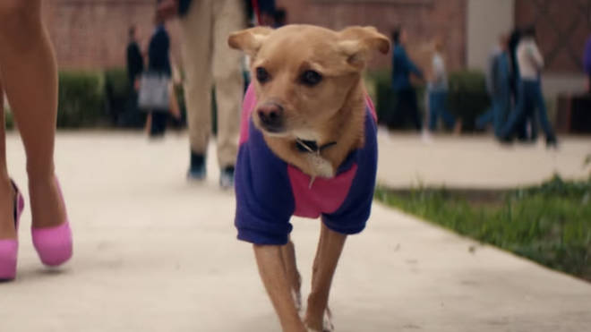 Toulouse the dog in Ariana Grande's 'thank u, next' music video