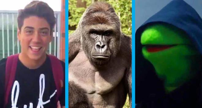 biggest memes of 2016 quiz