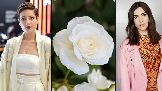 Halsey, White Rose, Dua Lipa