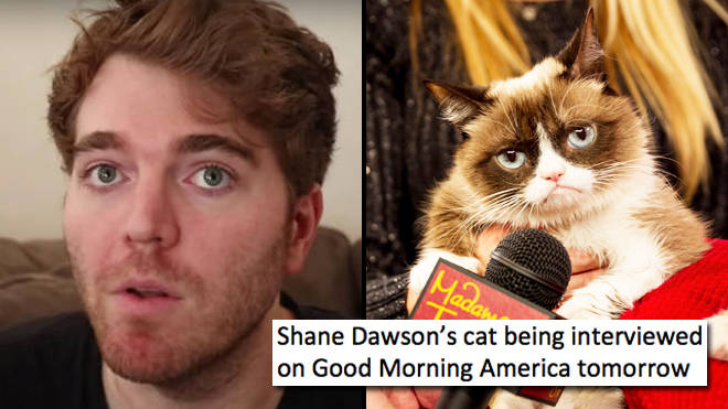 The funniest Shane Dawson cat memes