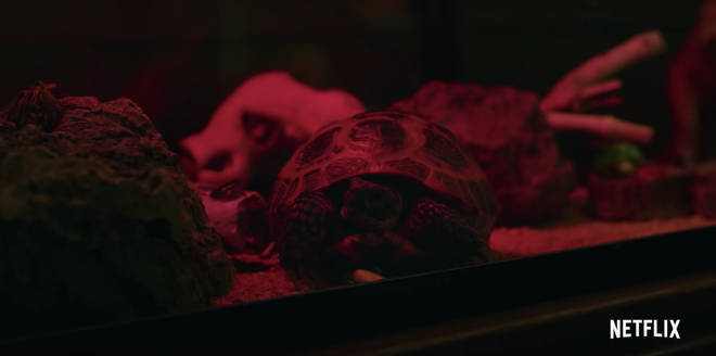 Dustin's turtle Yertle returns in Stranger Things 3