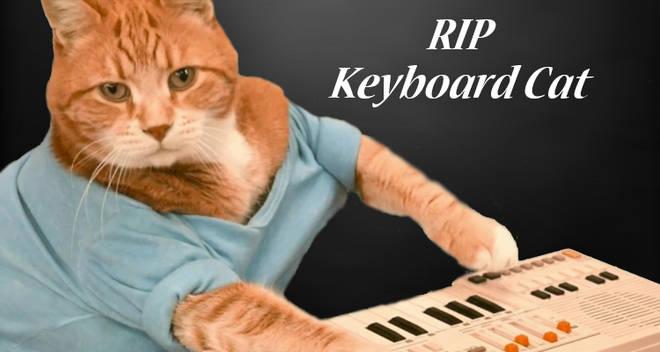 keyboard cat dead