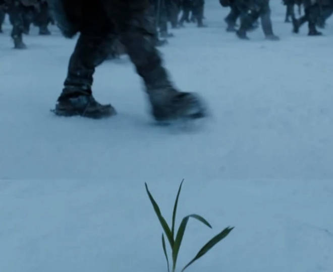 In the Game of Thrones finale, as Jon Snow and the Wildlings walked north of the Wall, we saw a little sapling in the snow